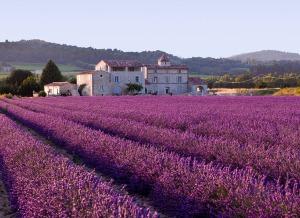 Lavendelvelden-in-Frankrijk